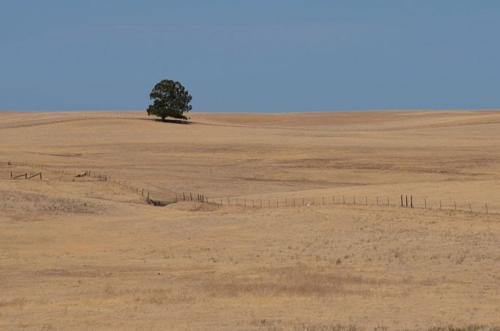 Cattle ranch in Central Valley